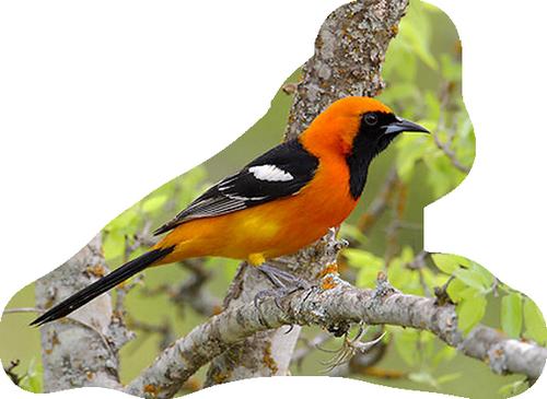 oiseaux 174