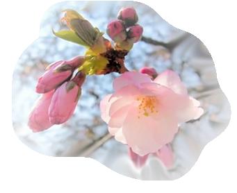 Tubes fleurs de printemps page 9 - Fleurs roses de printemps ...