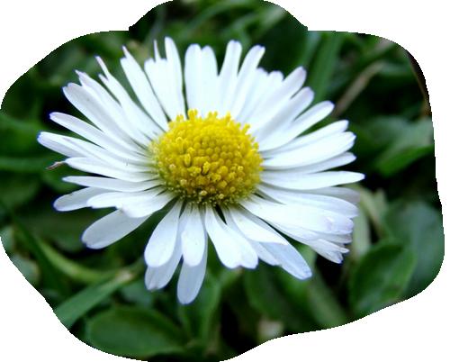 lac fleurs printemps blanches - photo #47