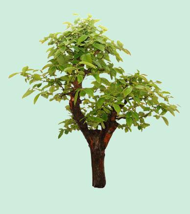 Tubes pays asiatique fleurs page 2 - Dessin arbre chinois ...