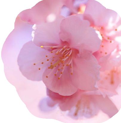 Tubes fleurs de printemps page 7 - Fleurs roses de printemps ...